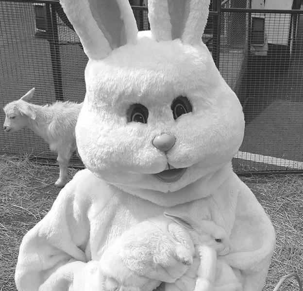 petting_zoo_bunny_bw